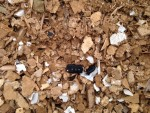 test axtor rozdrabniacz do biomasy komptech agrex-eco