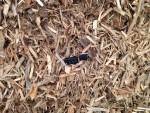 test axtor rozdrabniacz zrzyny tartaczne komptech agrex-eco